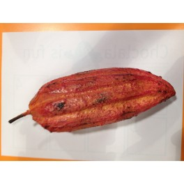 Cocoa Pod Pink in wood